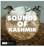 Big EDM Sounds Of Kashmir WAV MiDi Sylenth1 Spire Serum